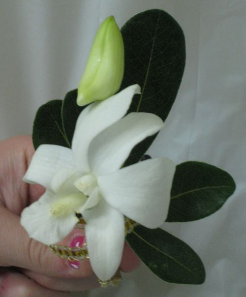 White Dendrodium boutiniere 68