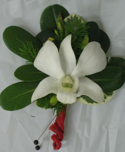 White dendrodium stems wrapped 65